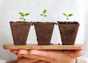Plant-based-Soirées