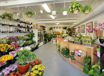 Florabunda specializes in cut flowers for DIY decor