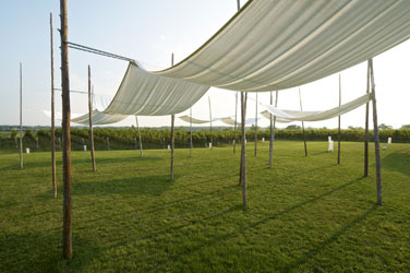 Picture dining beneath the canopies at Ravine Vineyard